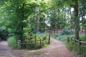 Chantry Wood
