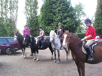 Holistic Horse and Pony Party