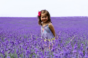 Mayfield Lavender