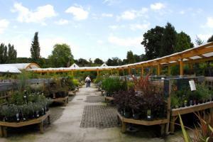 Ashtead Park Garden Centre