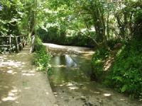 Alphington Pond