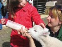 Kidsrome Farm